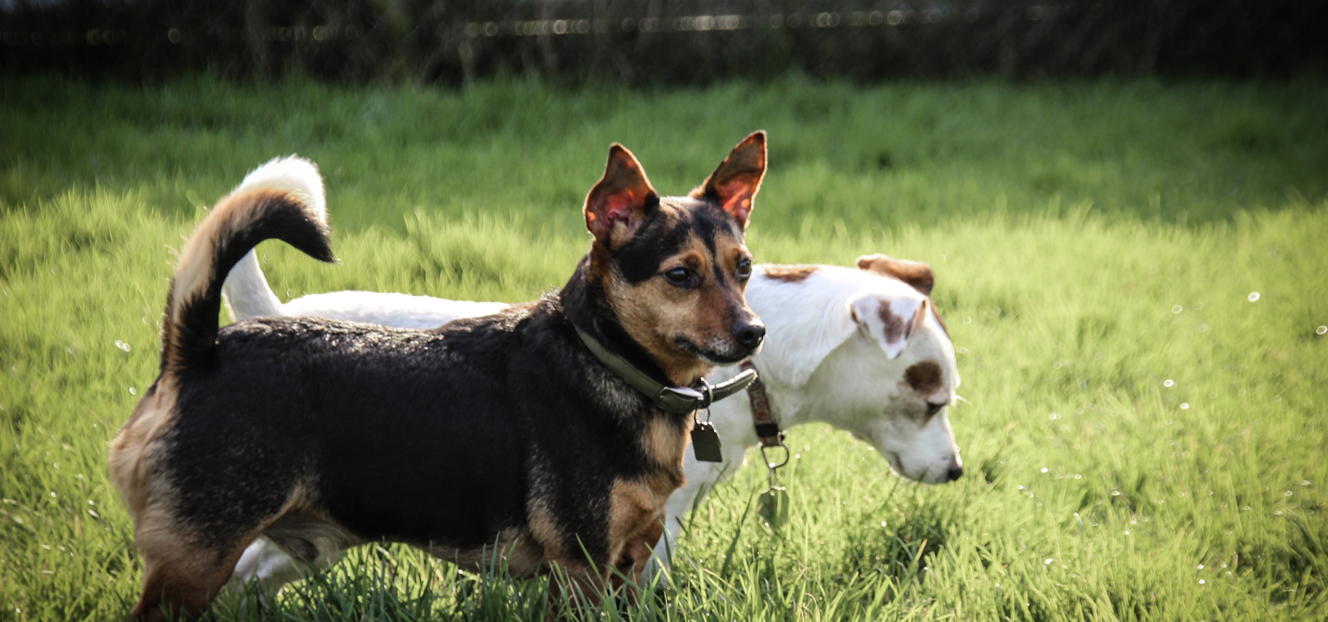 Lilly and Alvin