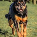 Yeovale Kennels - recent residents