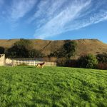 Yeovale Kennels - Exercise Paddock