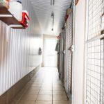 Yeovale Kennels - Kennel Block Interior