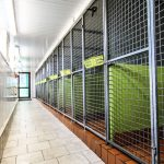 Yeovale Kennels - Kennel Block Interior