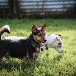 Yeovale Kennels - Lilly and Alvin