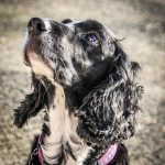 Yeovale Kennels - Molly